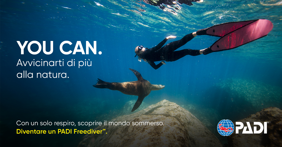 IT Freediver2 Blog Post 1200x600